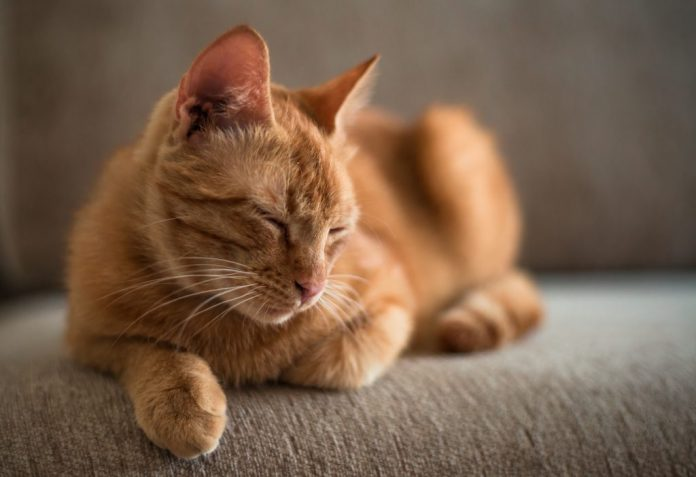 Cats Love Catnip Because It Protects Them From Mosquitoes, finds new research