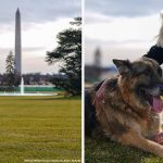 First dogs Major and Champ arrive at the White House (Photo)