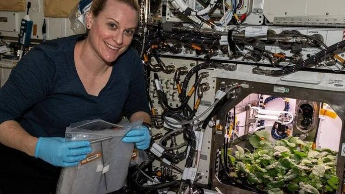 ISS Astronauts Eat First Radishes Grown in Space on New Year's Eve