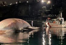Italian coastguard recover huge whale carcass (Photo)