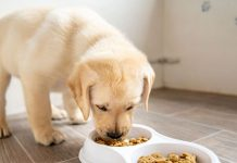 US Pet Food Recall Could Mean Danger for Your Dog or Cat, Report