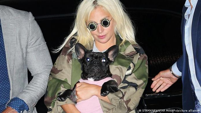 Lady Gaga's Dog Walker Shot, Two of Her French Bulldogs Stolen, report says
