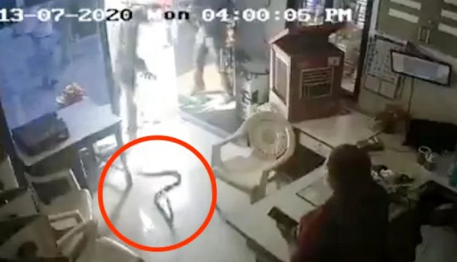 Massive deadly cobra discovered in gas pump (Video)