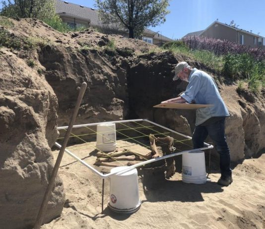 Study: 'Ice age' horse skeleton found in Utah backyard isn't what we thought