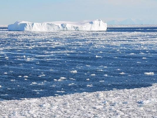 Changes in Antarctic marine ecosystems, says new research