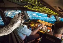 Stowaway cat attacks pilot on passenger flight, forcing emergency landing (Report)
