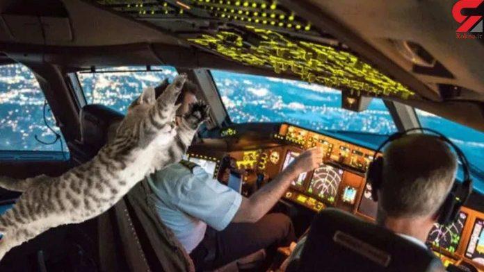 Stowaway cat attacks pilot on passenger flight, forcing emergency landing (Report)