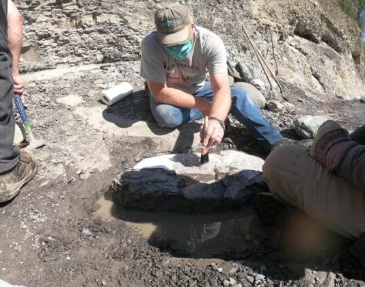 Amateur fossil hunter finds 84-million-year-old fossilized turtle on Vancouver Island (Study)