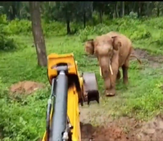 Forest officials use excavator to rescue elephant from pit (Watch)