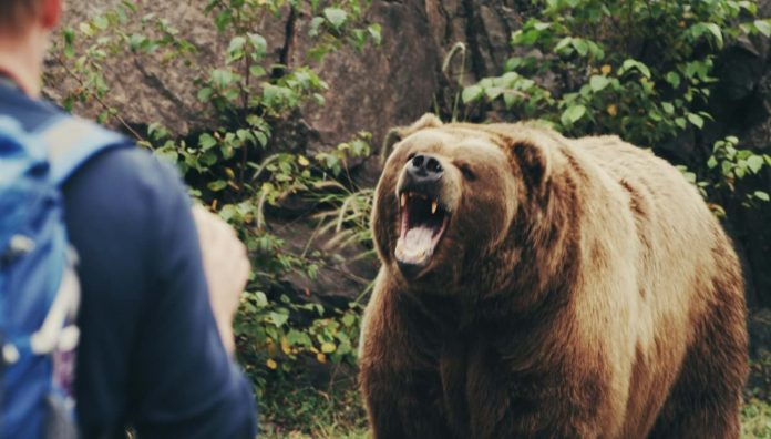 Grizzly attacks B.C. man on his property, dogs escape injury, Report