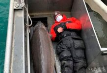 Hold on! 240-pound fish, age 100, caught in Detroit River (Photo)