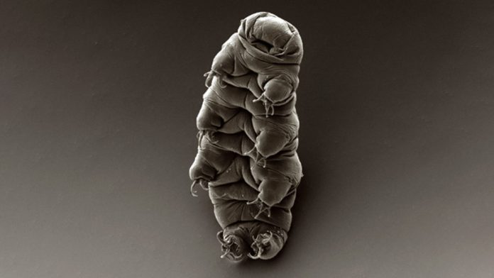 Recherchers Shot Tardigrades 200mph Out A Gun To See If They'd Survive Interplanetary Travel