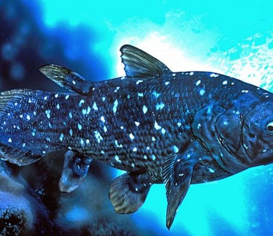 Research: The Strange Biology of the Fish That Lives for a Century