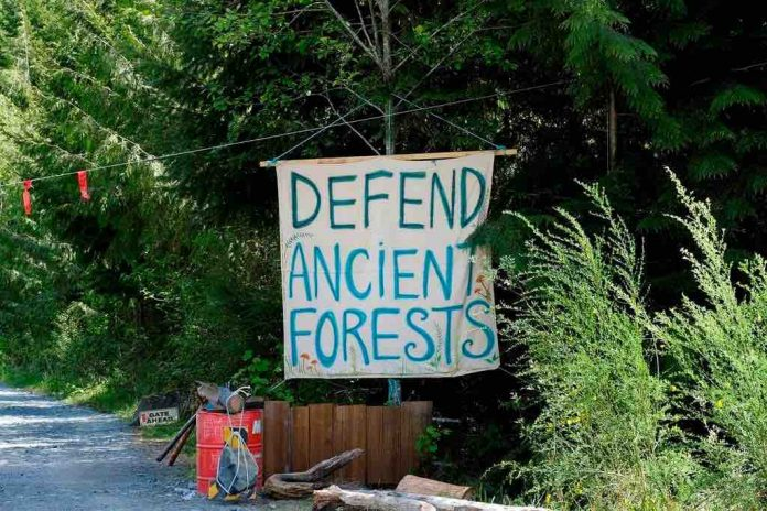 B.C. Judge rules against extending injunction on old-growth blockades at Fairy Creek