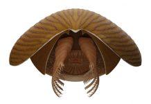 Researchers find massive half-billion-year-old fossil species in Canadian Rockies