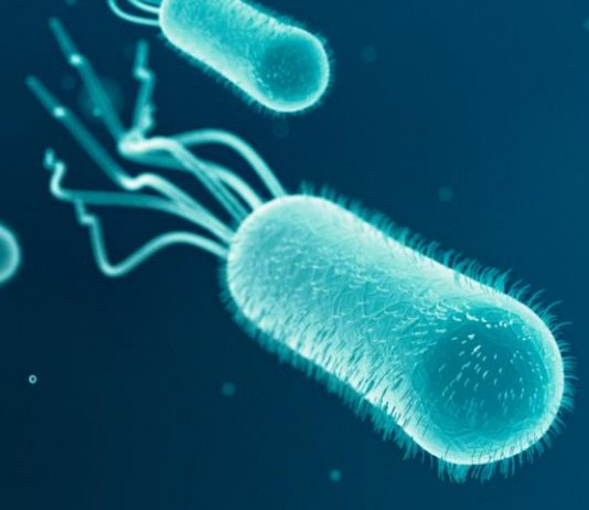 Scientists employ microbes for storing and retrieving energy from renewable sources
